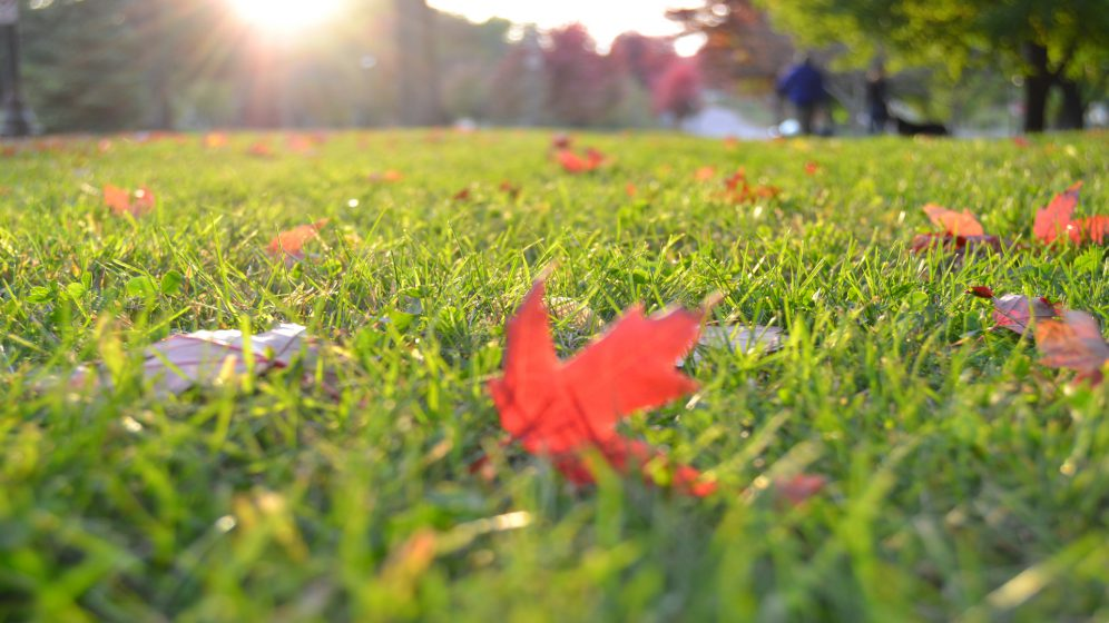 6 Easy Steps to Fall Lawn Maintenance