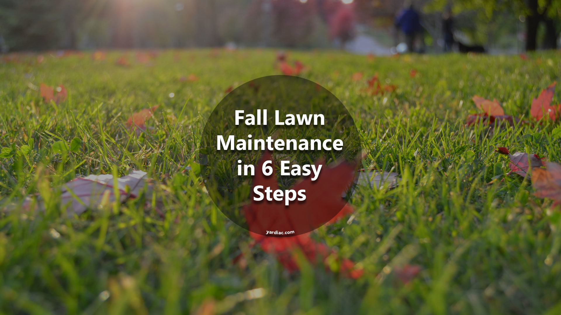 Fall Lawn Maintenance in 6 Easy Steps