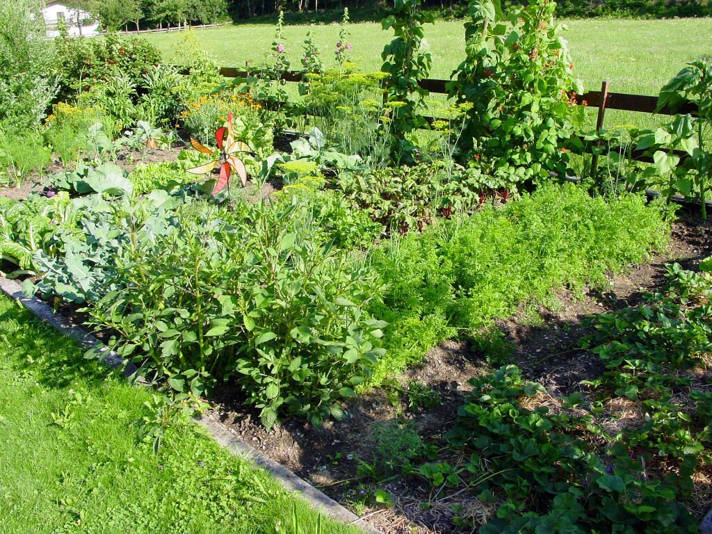 How to compost healthy garden