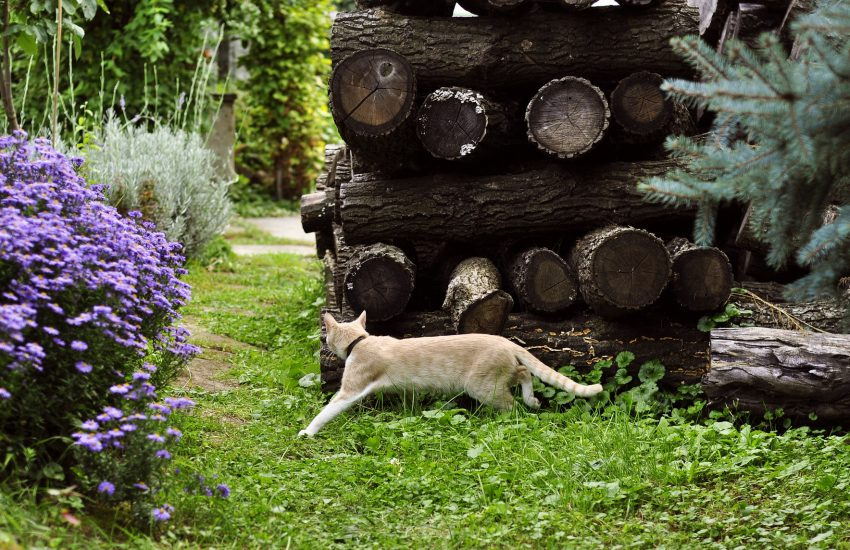 How to keep cats out of your yard main
