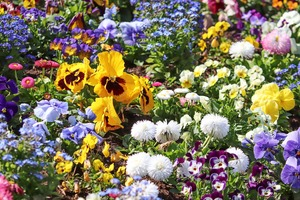 how to keep grass out of flower bed
