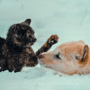 composting cat and dog poop